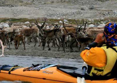 Grpoenlandia_kayak