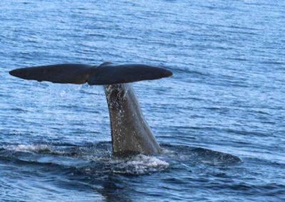 lofoten-noruega-ballena
