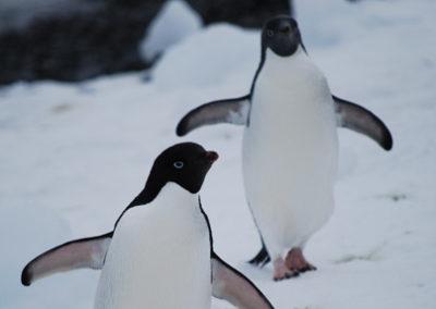 Antartida_Pinguinos