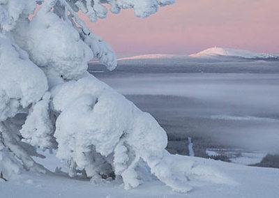 laponia-bosques-nevados_2838