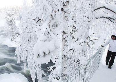 laponia-finlandia-oulanka tierras polares