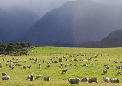 nueva-zelanda-tour-viaje