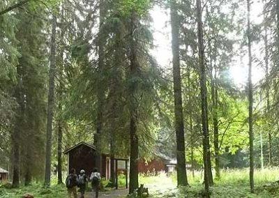 trekking-finlandia bosques cabañas tierras polares