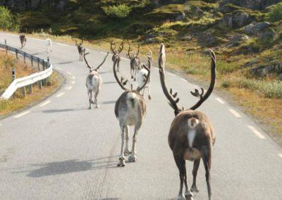 CABO-NORTE-COCHE de alquiler a tu aire renos noreuga tierras polares