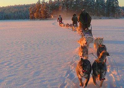 FINLANDIA-laponia-Trineos_de_perros tierras polares