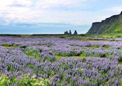 islandia-costa-vik