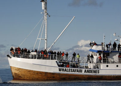 whale-safari