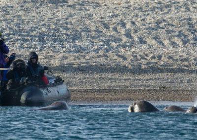 Crucero-Hondius-Svalbard