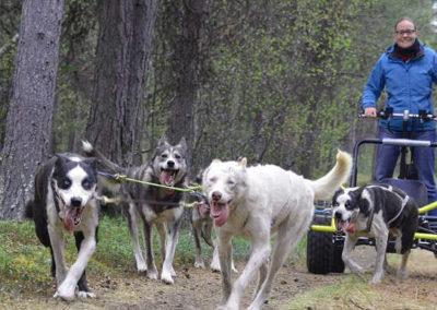 trineo de perros-kiruna-otoño-suecia-lofoten