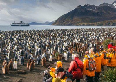 Pingüinos-Shetland-del-Sur