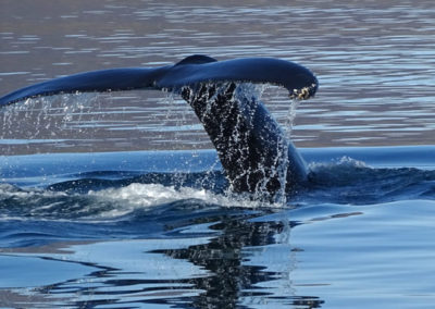 Avistamiento de ballenas en Akureyri, viaje a Islandia