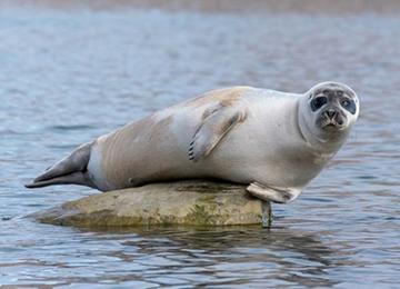 Svalbard avistamiento focas viaje kayak