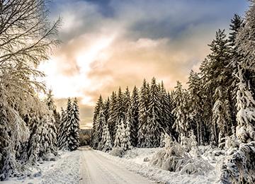 Aventura en los bosques de Laponia