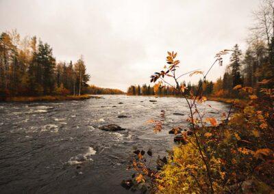 Laponia sueca otoño